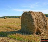 Анализ кормов