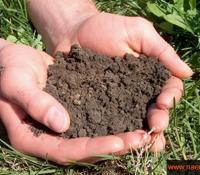 Оценка плодородия почв
