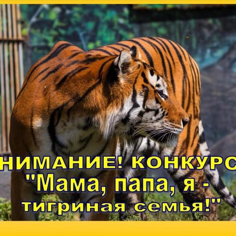 Конкурс «Мама, папа, я – тигриная семья»