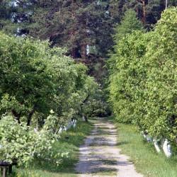 Ботанический сад имени В.М. Крутовского