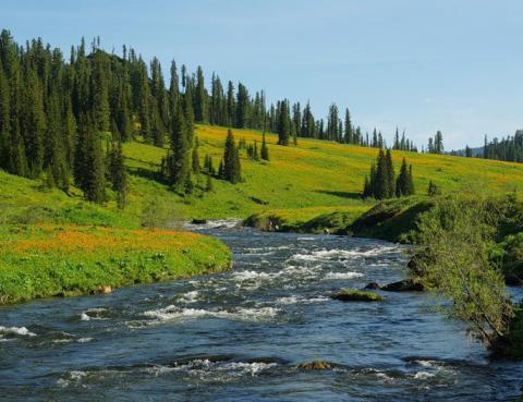 Река Оя