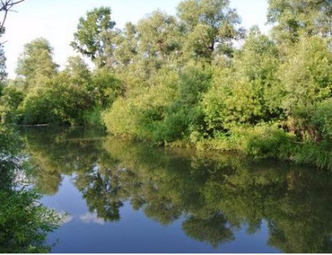 Река Большая Шушь