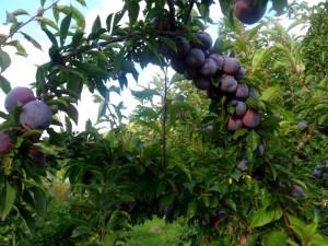 «Тут едят фрукты прямо сдеревьев»: необычный эко-парк вКрасноярском крае