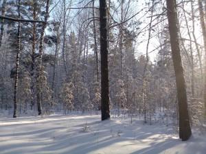 Природа Большемуртинского района