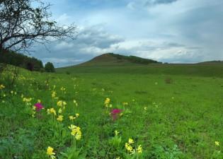 Природа Емельяновского района