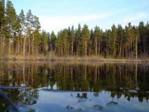 Природа Казачинского района