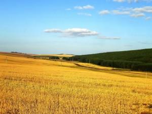 Природа Назаровского района