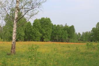 Природа Саянского района