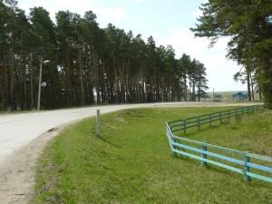 Припоселковый сосновый бор села Тюхтет